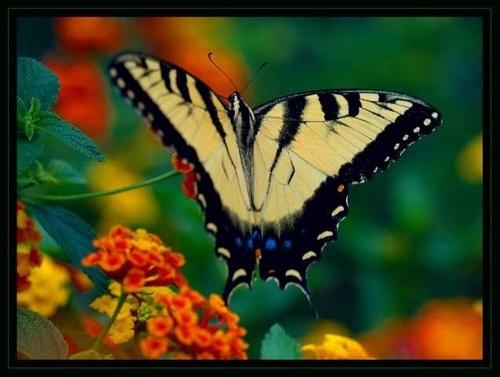 Butterfly 2 by JenG
