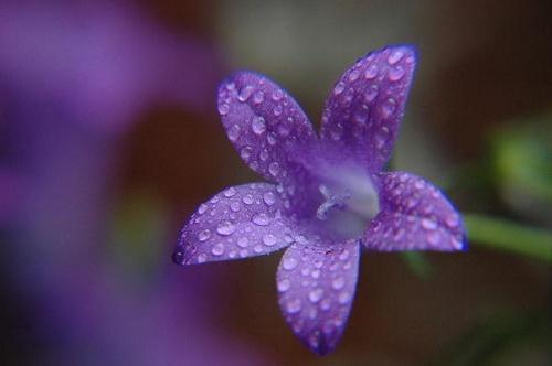 Blue Dew by AEasthope67