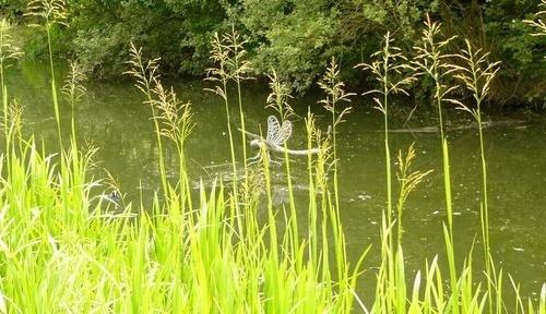 pond life by patman