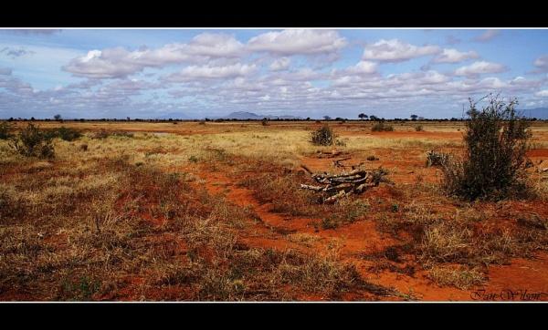 Tsavo - Kenya by kats_dad