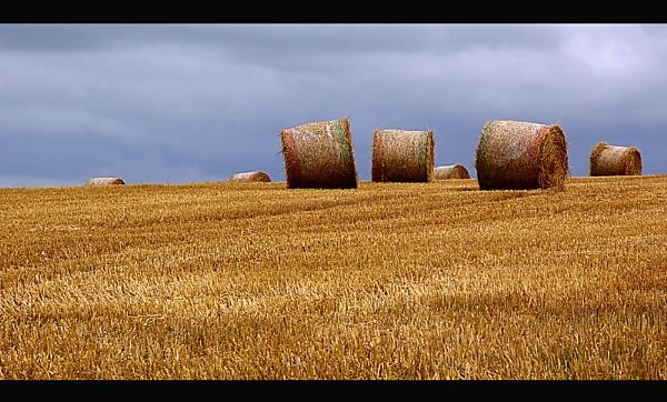 Harvest Time by Bridie