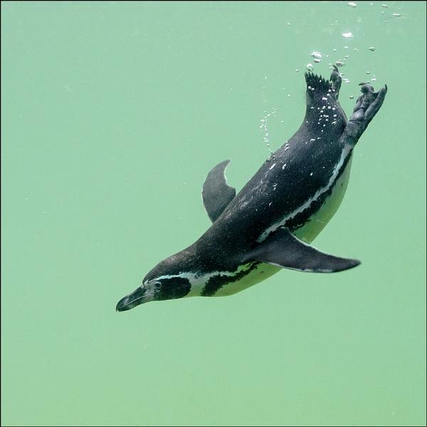 The Dive... again... by ejtumman