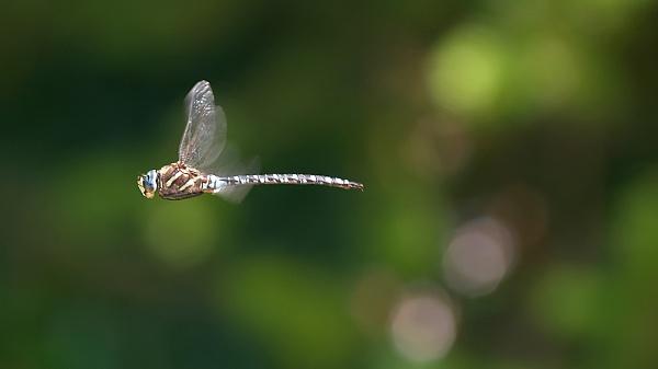 Dragon Flight by MarkyMarc