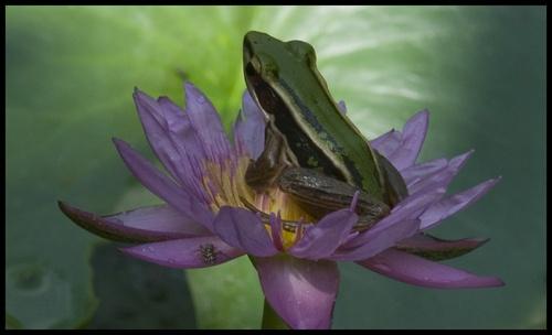 Frog I by mariner