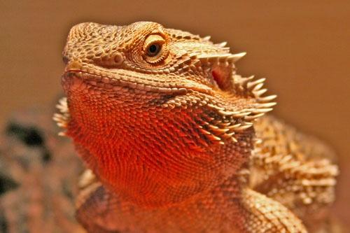 Dragon by leons_photos