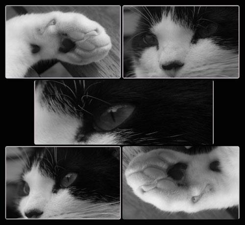 cat nap by vonny