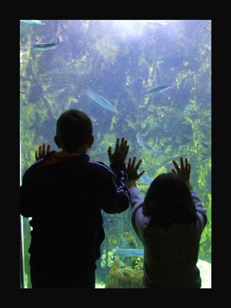 Underwater World by Ricardos