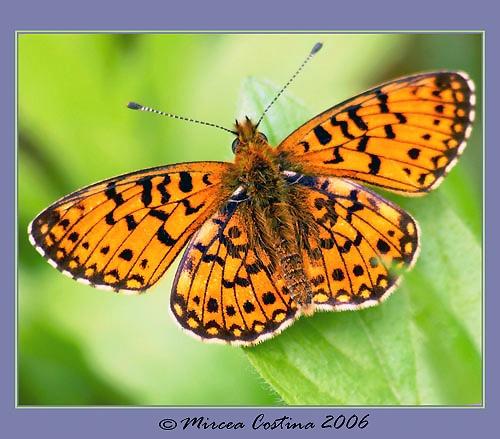 orange by mirceax