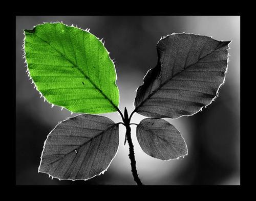 Green Leaf? by PhotoLM