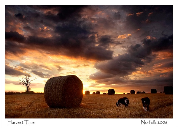 Harvest Time by KathyW