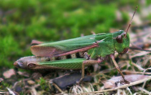 Little green jumper by RipleyExile