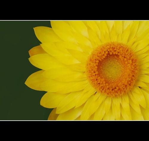 Yellow on Green by fairlytallpaul