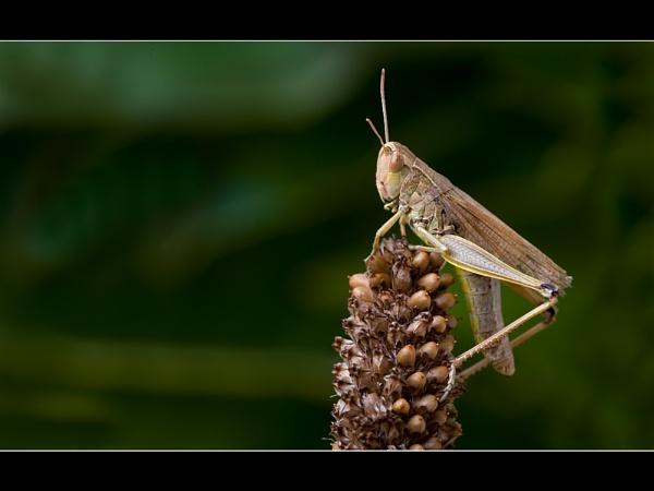 hopper by gtroop