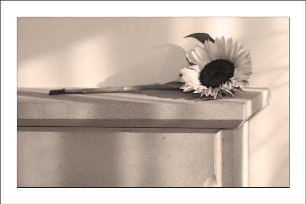 Sunny Day by ian walker