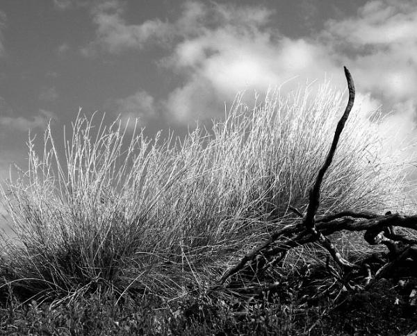 Moors in mono by dunczilla