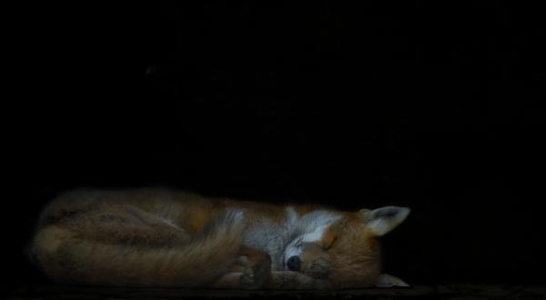 Sleeping Beauty by AlleyCatz