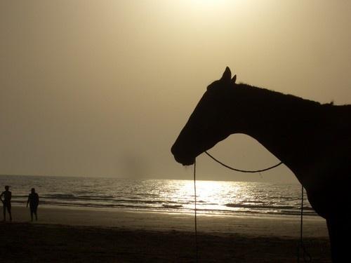 Horse on Beach by silep