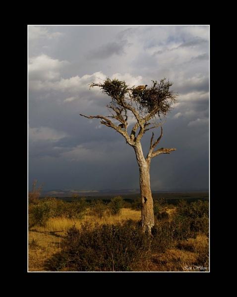 Mara - Distant Rains by kats_dad