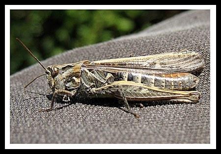 Grasshopper by jimbo75