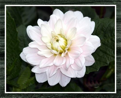 Flora3 by troberts