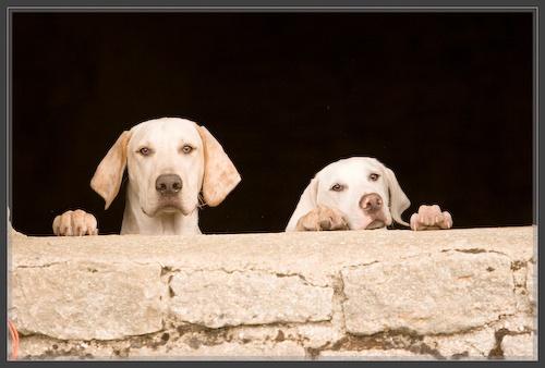 Hound Dogs by bytheedge