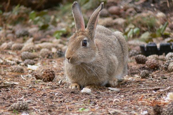 Wild Rabbit by Peter_Farrell
