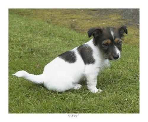 A Puppy Star by jamsa