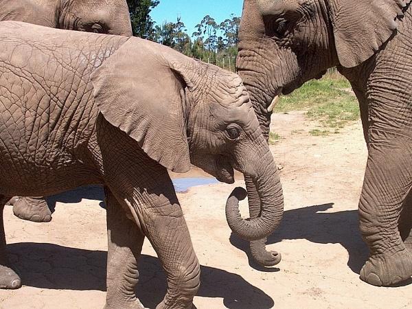 Elephant parade by cats_123