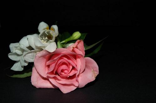 Rose & Freesia by kristinadimascio