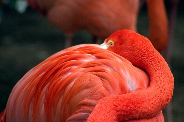 Flamingo by nathanrobinson