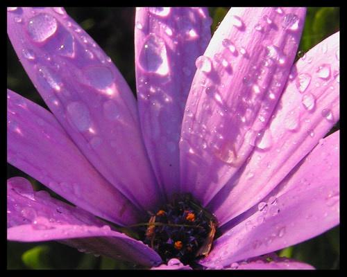 Raindrops by pamnew1