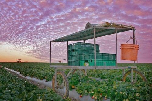 The Farm by suspectim