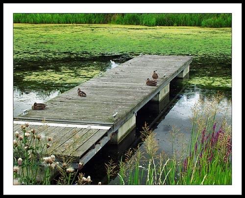 Sittin On The Dock Of........ by billbris