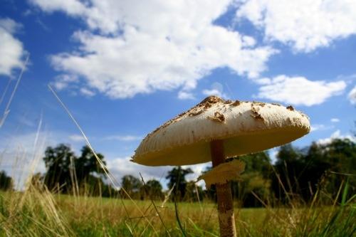 Mushroom Cloud by clayman