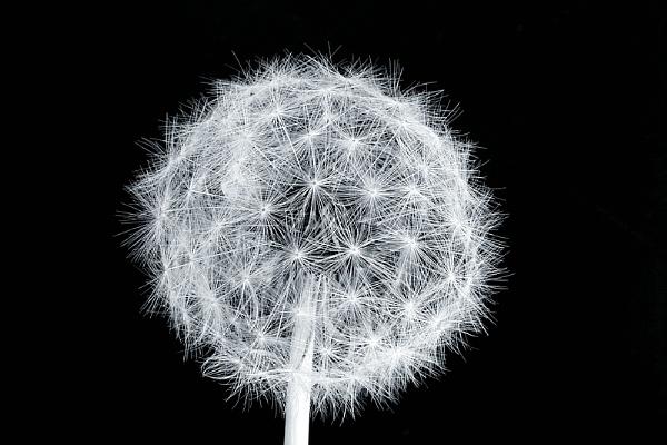 Electric lollipop by Pixellent