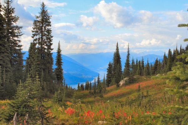 Alpine Meadow by Brian_B