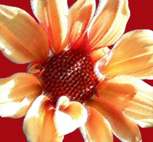 flower by mcgregom