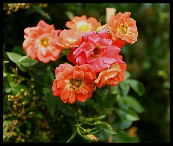 Wakefield Flowers by ODub