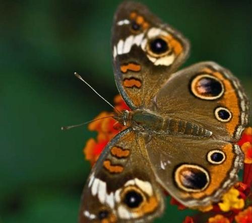 Butterfly 4 by JenG