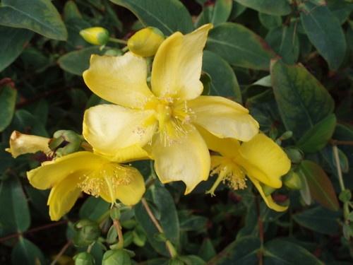 Yellow Flower by MissyMoo