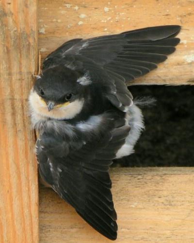 Baby bird by neilhw