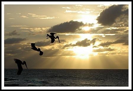 Pelican sunset by jimbo75