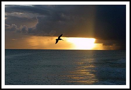 Pelican sunset 2 by jimbo75