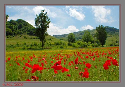 summer landscape by mirceax