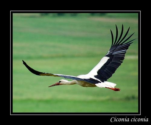wings by mirceax