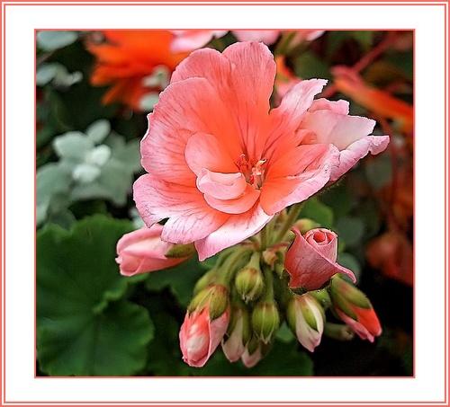 Nice n peachy by KKmoments