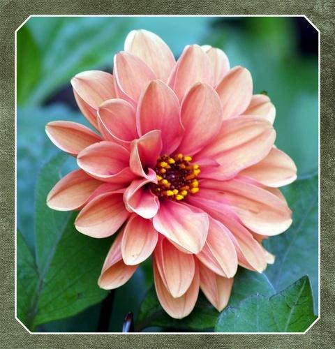 flora 6 by troberts