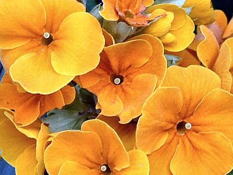 Orange flowers by justinasnap