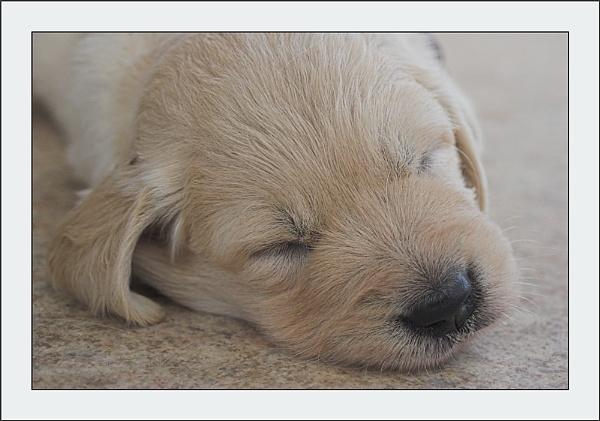 Asleep by conrad
