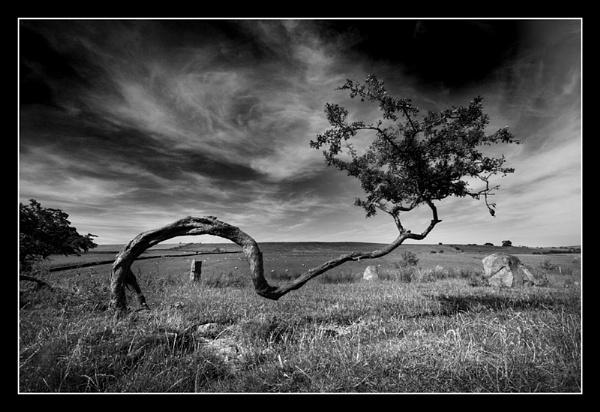 Hawthorne. by danbrann